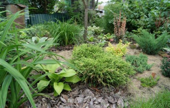 Кипарисовик горохоплодный Филифера Нана (Chamaecyparis pisifera Filifera Nana). Невысокий, плотный кустарник полушаровидной формы.  Хвоя чешуевидная, прижатая, зеленого цвета. Растет медленно, к 10 годам достигает полуметра в высоту и около метра в ширину. Диаметр кроны взрослого растения: полтора метра, высота - один метр. На известковых и сухих почвах растет хуже. Кустарник-долгожитель, доживает до трехсот лет.