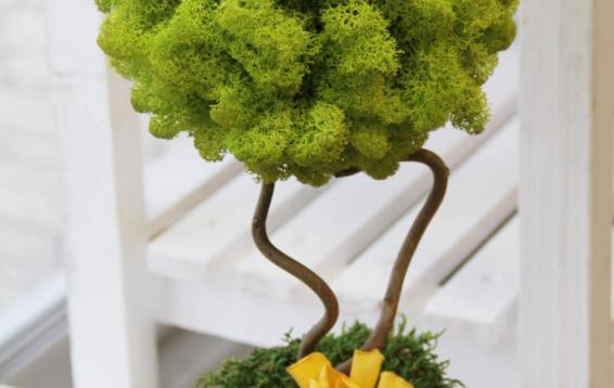 Топиарий из ягеля, плоского мха, цветка гардении и хедеры