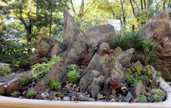 """Чешская скалка - довольно новое явление для российских садов. Прежде, чем создать большую, почему бы не попробовать сделать ее в миниатюре? Потребуется горшок, """"правильные"""" камни, фантазия и растения. За последним, разумеется, к нам! Наполнение: сосна горная мугус (Pinus mugo mugus), барбарис тунберга (Berberis thunb. sp.), очитки (Sedum sp.), молодило (Sempervivum sp.), камнеломка (Saxifraga sp.)."""