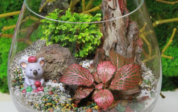 Очень добрая и милая коала ждет маму! Ну или папу)) Послушная и добрая девочка. Практически не требует ухода. Наполнение: Фиттония вершаффельта (Fittonia verschaffeltii), Селагинела Мартенса (Selaginella martensii), Коала (Phascolarctos cinereus)