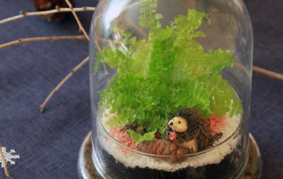 Такой вот симпатичный ёжик. Запасся еловой шишкой и ушел жить в наш флорариум. Наполнение: Ёж амурский (Erinaceus amurensis), Нефролепис (Nefrolepis sp.).