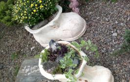 Шамотный башмачок. Какая-то Золушка обронила, видимо. Главное, чтобы после двеннадцати в тыкву не превратился! ))) Материал: шамот (не боится морозов, легко моется, не выгорает). Наполнение: Хризантема (Chrysanthemum sp.), Барвинок (Vinca sp.), Очитки (Sedum sp.), молодило (Sempervivum sp.),
