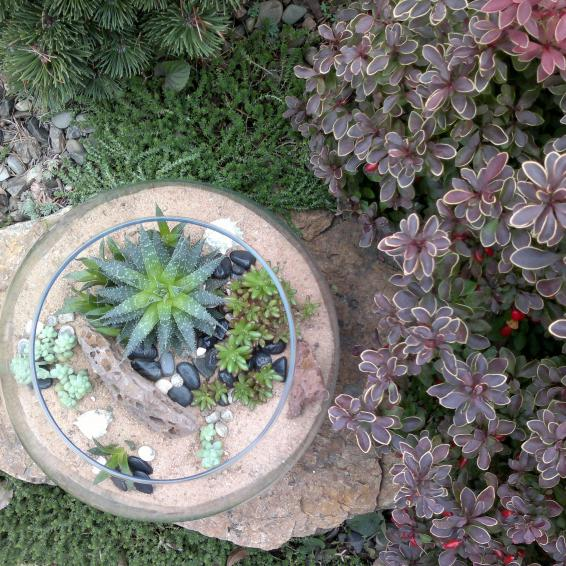 Суккуленты, песок, камушки, ракушки, а значит, море где-то рядом! Наполнение: Алоэ (Aloe sp.), Седум буррито (Sedum burrito)