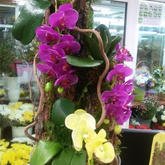 Композиция в стекле: мох стабилизированный, кора натуральная, фаленопсис искусственный